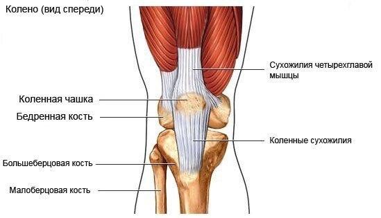 Травмы коленей и силовые нагрузки
